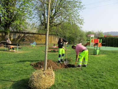 les-agents-ont-plante-des-arbres-vers-les-aires-de-jeux
